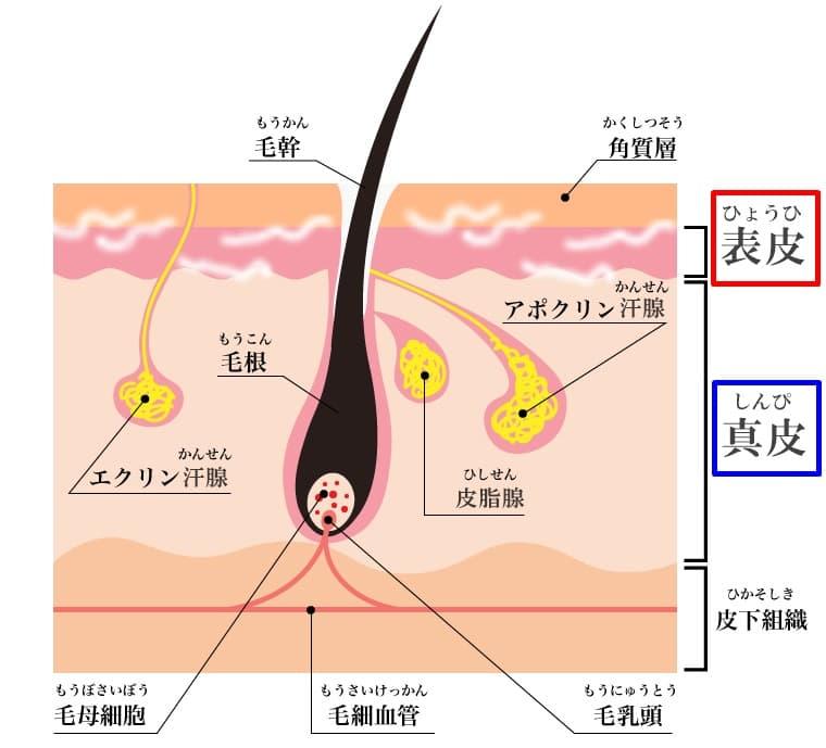 「表面麻酔」の鎮痛作用と注意点
